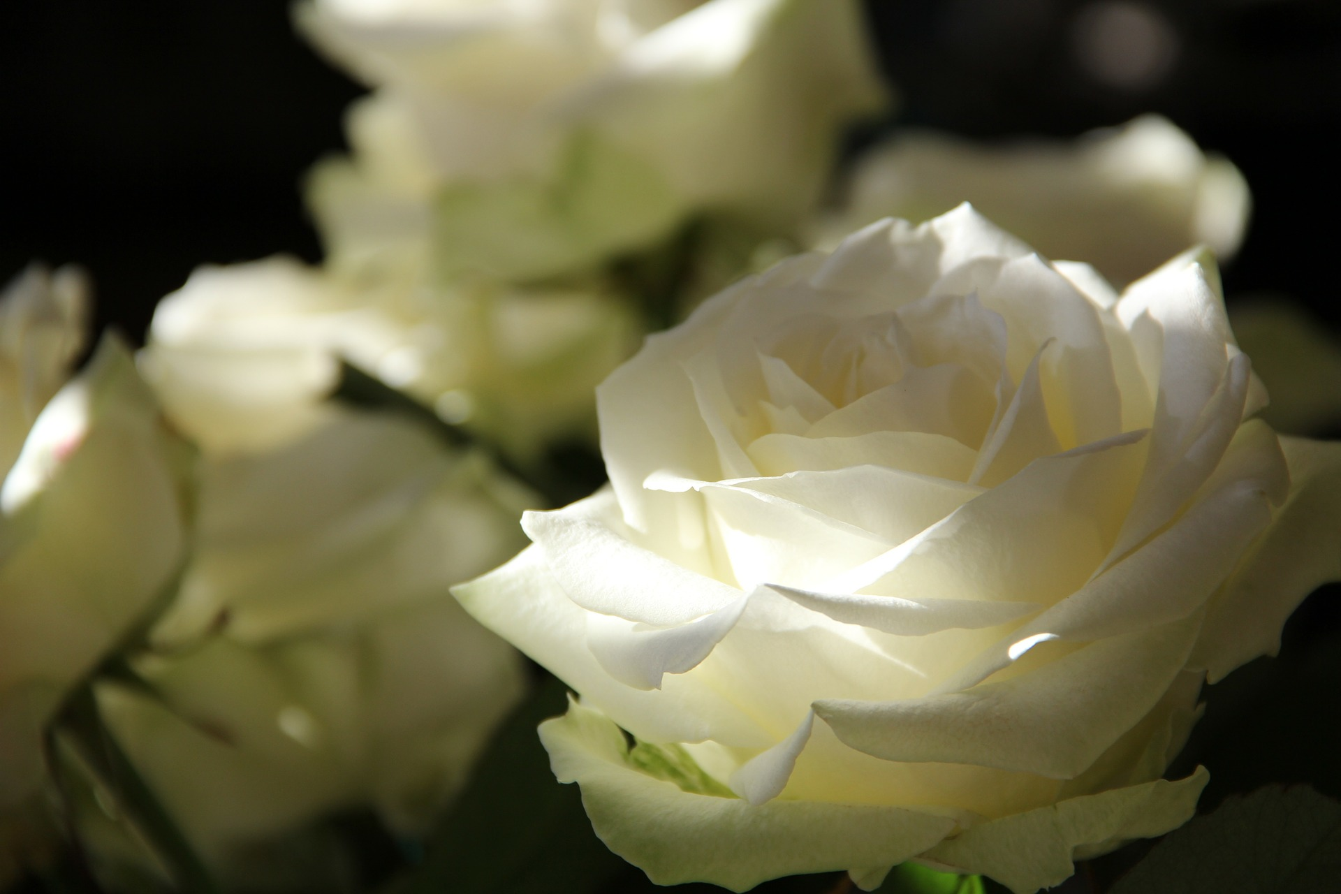 La rose du deuil. Un outil pour accompagner le deuil